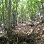 Photo of Parco Nazionale delle Foreste Casentinesi
