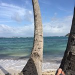 Sugar Reef Bequia Foto