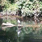 The White Swan Photo