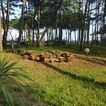 Parco in pineta