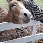 Odessa Wildlife Rescue and Sanctuary