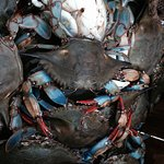 Best blue crabs I have ever had.