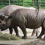 Foto de Pittsburgh Zoo & PPG Aquarium