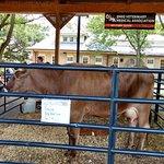 The Ohio Expo Center & State Fair Foto