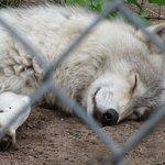 Foto de Saskatoon Forestry Farm Park & Zoo