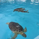 Fun & educational. The tiny hatchlings were adorable & the large turtles were so inquisitive and