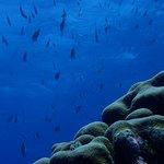 Foto de Happy Divers Aruba