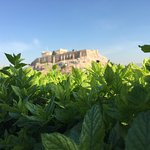 Mint in focus, Acropolis in the background! View from the breakfast table. Amazing.