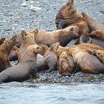Noisy sea lions