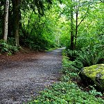 Burnaby Mountain Park Foto