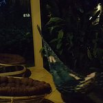 Botanica Guest House Foto