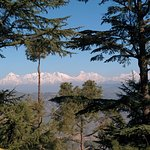 Himalayan Range - you can see Nanda Devi, Panchachuli and Trishul