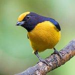 Aves de los alrededores de Zamora