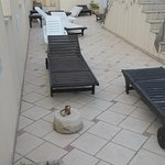 Foto de Vent de Garbi Aparthotel
