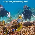 Andy's dive destinations are teeming with fish- even in the off season!