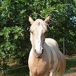 magnifique cheval, vue de la chambre