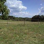 champs vue de la chambre