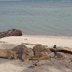 Photo of Beach Resort Hacienda