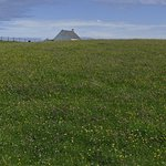 The Machair - coastal areas of wild flowers