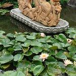 龍華寺の境内の池に咲いてた蓮の花。。。。。。