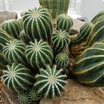 In the Cactus section