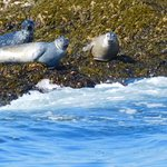Some of the seals that we saw.