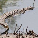 Photo of Sungei Buloh Wetland Reserve