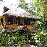 Copa de Arbol Beach and Rainforest Resort Foto