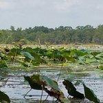 Champagne's Cajun Swamp Tours Foto