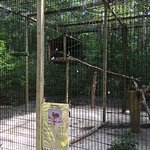 Oatland Island Wildlife Center Foto