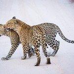 Foto di Savanna Private Game Reserve