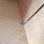 Insecto muerto en el suelo (convivimos con él todos los días)