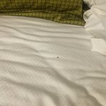 bed bug found once we removed the pillow