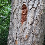 Cottonwood Island Nature Park Foto