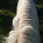 Photo of Promenade a cheval, Chez Elise