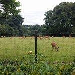 Deer enclosure right in front of the hall door