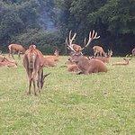 Deer on grounds