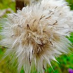 Runcorn Hill Park Local Nature Reserve