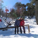 Antes de llegar al Batea,un bosque de araucarias