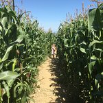 Lots to do, especially the maize maze this summer