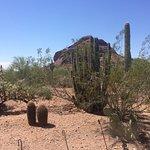 Desert Botanical Garden Foto