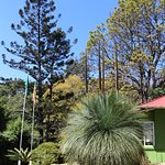 Vumba Botanical Gardens and Reserve