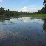 MacRitchie Reservoir Foto