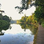 Photo de MacRitchie Reservoir