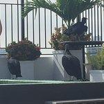 Deck y pileta con visitas especiales