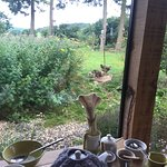 View at breakfast - chickens, bird table - therapeutic