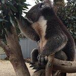 Kangaroo Island Wildlife Park Foto