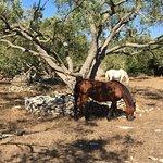Foto de A Loghja Di Cavallo Morto
