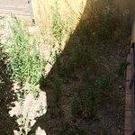 Manque d'entretien espace vert