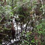 Big Cypress National Preserve Foto